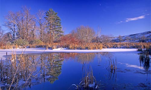 Pond in Winter, Snow Mountain Ranch.