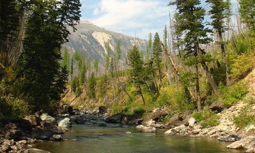 Montana Council of Trout Unlimited