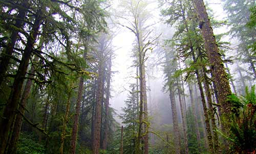 Oregon's Elliott State Forest to remain in public hands